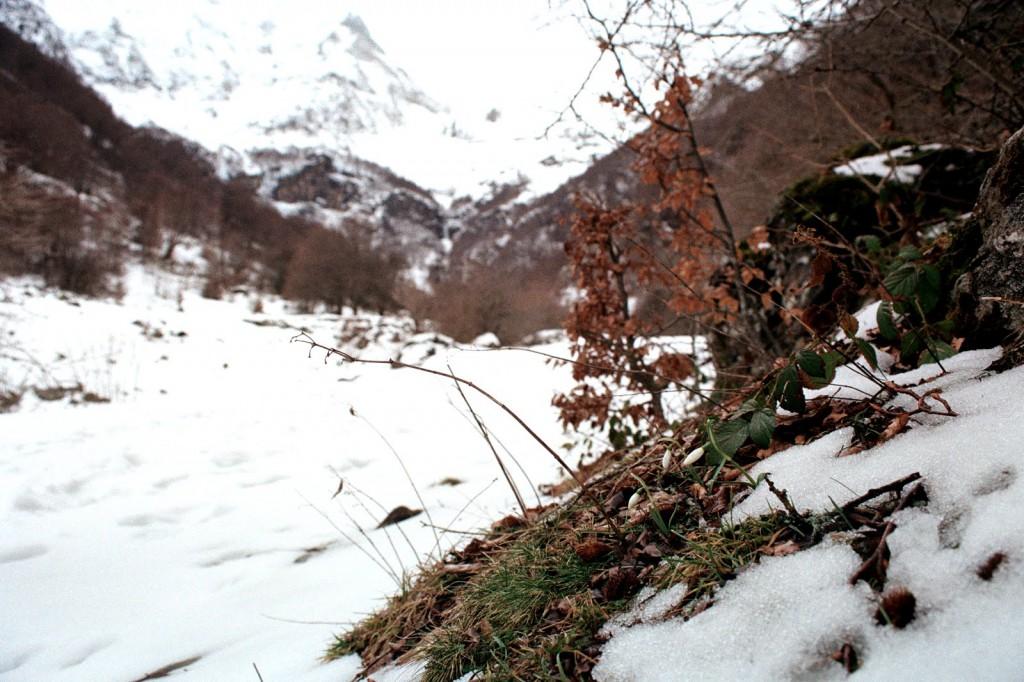 przebiśniegi w lutym, Pireneje