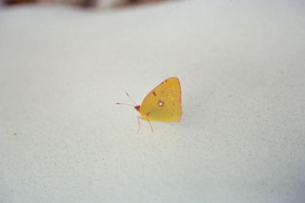 motyl w październiku