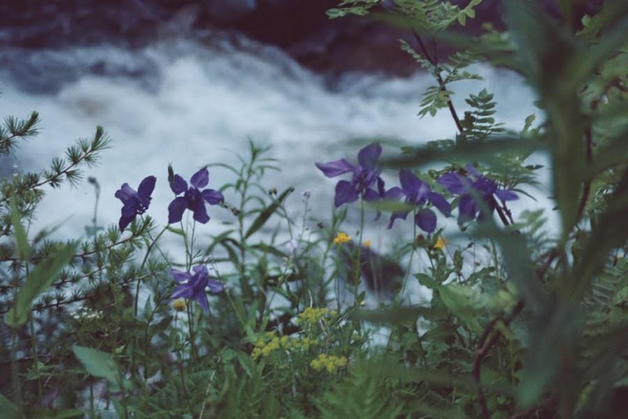 orliki nad rzeką