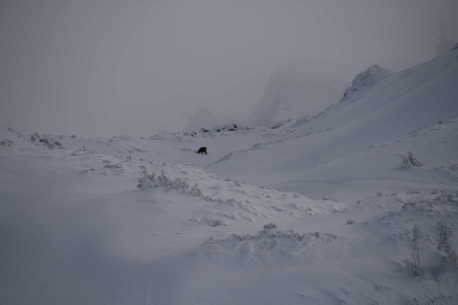 Tatry 2013, kozica troszkę powyżej Suchej Czuby