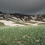 białe kwiatki, było ich pełno