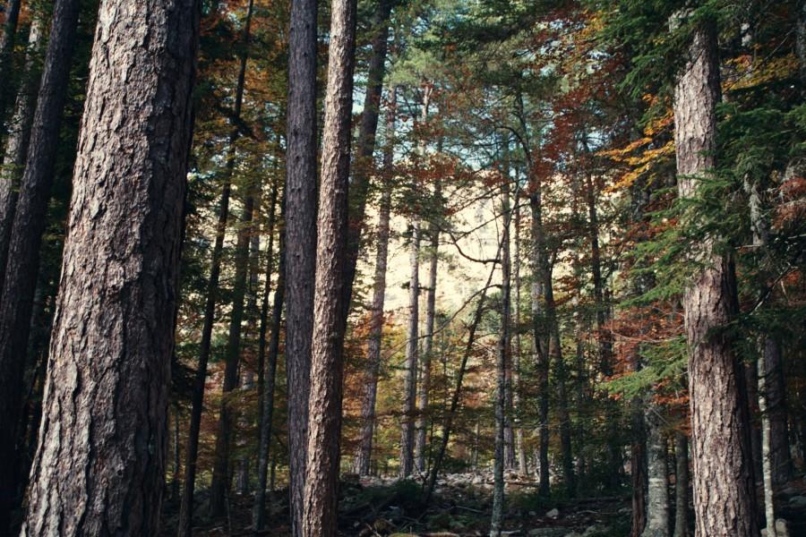 las poniżej Col di Verghio