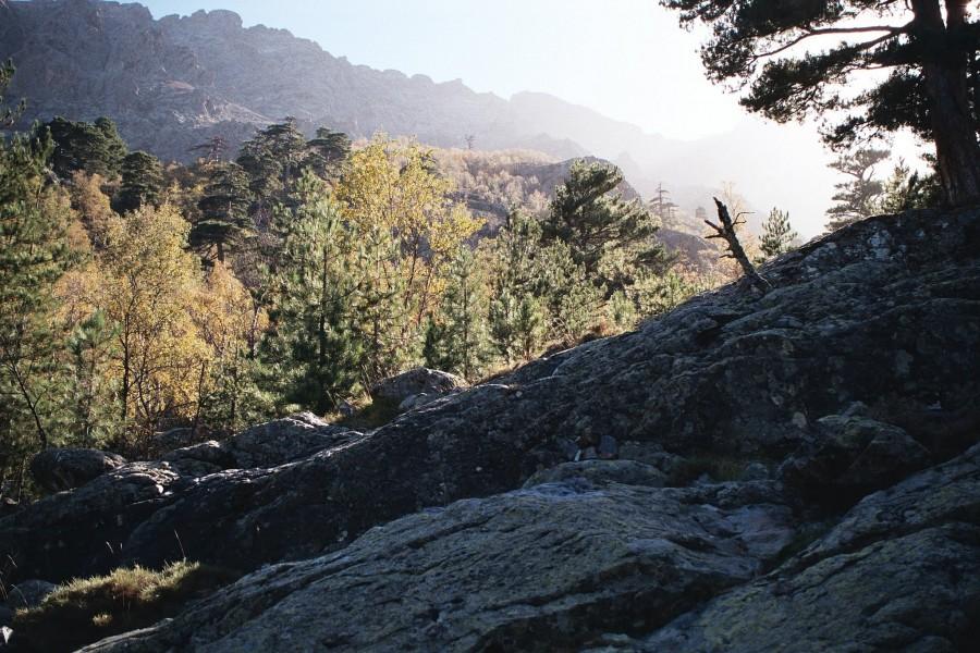 las na skale pod granią Lungarellu
