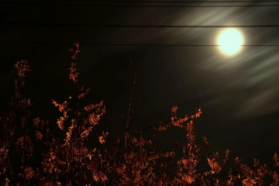 wschód księżyca w forsycji