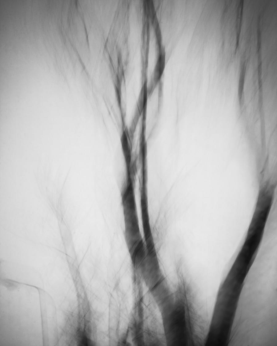 topole, Wyróżnienie w International Photography Award 2014, fot Katarzyna Nizinkiewicz