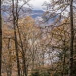 bukowy las w Pirenejach