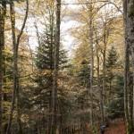 leśny szlak w Pirenejach