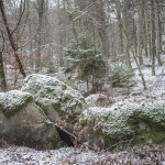 typowy las nad jeziorem Immeln