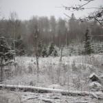 leśna polana. widziałam wiele wycinek drzew