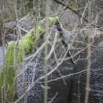 kanał w Brotorpet- kiedyś służył do spławiania drzew
