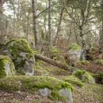 Kjugekull- rezerwat z wielkimi odkrytymi skałami