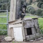 pies uwiązany do budy, Mare a Monti, Korsyka