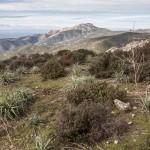pastwisko, Mare a Monti, Korsyka