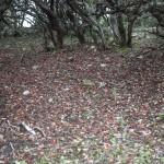 ziemia zaslana opadlymi owocami arbutus unedo ( czyli poziomkowca)