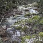leśny strumyczek, Mare a monti, Korsyka