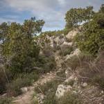 Drzewka poziomkowe ( chruściny jagodne czyli arbutus unedo)
