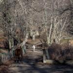 chodzące wolno konie przed Marignana, Korsyka, styczeń