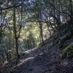 leśna ścieżka- wiele takich widzieliśmy