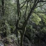 Gorges de Spelunca, Korsyka, styczeń