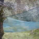 zbiory oliwek, Ota, Korsyka, styczeń