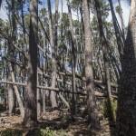 Zwalony las