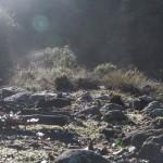 parująca rosa nad rzeczką, Korsyka, styczeń