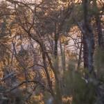 zachód słońca w lesie nad wąwozem Spelunca