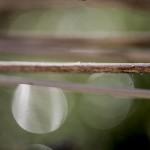 rosa na suchych badylach, Szczecin, luty