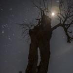 kasztan przy księżycu