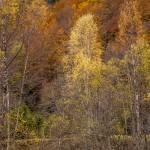 jesienny las, Pireneje listopad