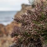 roślinność nadmorska, Korsyka, styczeń