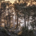 widok na wybrzeże ( Porto i Pianę), Korsyka, styczeń