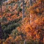 oświetlony zachodzącym słońcem las, Korsyka, styczeń