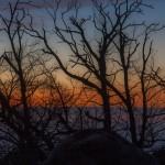 kasztany na tle zachodu słońca, Korsyka, styczeń