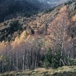 widok w górę doliny