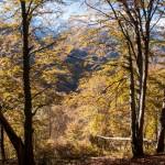 jesienny las, Pireneje, listopad