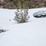 Pireneje, kwiecień, śnieżny most