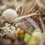 Pireneje, kwiecień, zeszłoroczny bobek w wersji macro
