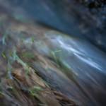 Pireneje, kwiecień, zalane łąki