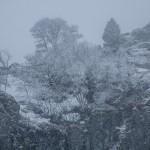 kwietniowa snieżyca