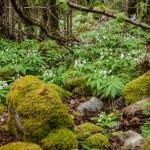 Pireneje, kwiecień morza kwiatów