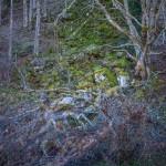 bajkowy bardzo gęsty las
