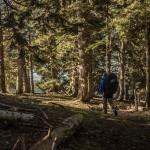 jodłowy las