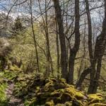 ścieżka biegnąca w głąb doliny