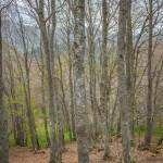 leśne beskidzkie klimaty