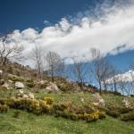 tarasowe pola w Mantet
