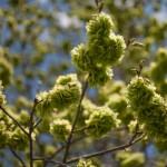 tajemnicze pięknie kwitnące drzewo