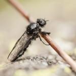 niepotrzebnie uratowana mucha