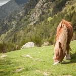 wyjątkowo zajęty koń