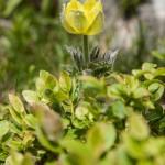 niżej zaczynały się już pojawiać letnie kwiaty, tu najprawdopodobniej mak